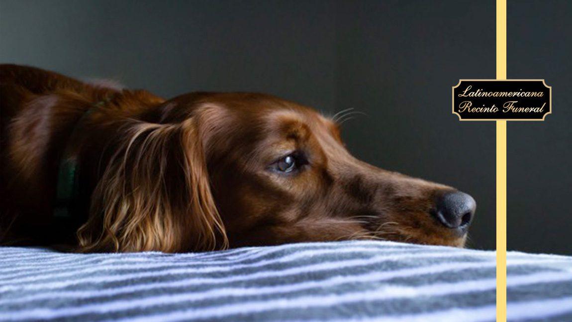 ¿Las mascotas sienten la pérdida de un ser querido?
